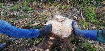 Törvényt ígér a miniszter az évszázados erdők védelmére