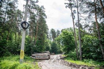 Fatelepet és energiafűz-ültetvényt hoznának létre Udvarhelyen