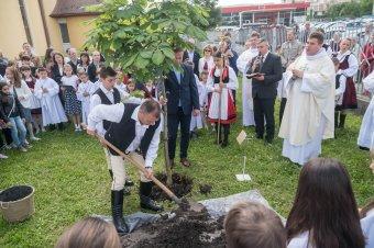 Elültették a pápalátogatás emlékfáit Székelyudvarhelyen