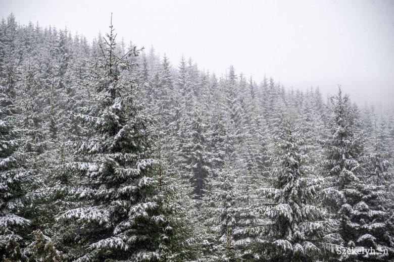 Áramkimaradást okozott a havazás Hargita megye északi részén