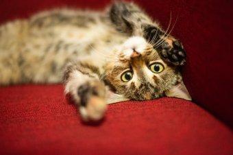 Jogerős: kutyák és macskák csak a szomszédok beleegyezésével tarthatók a tömbházban Temesváron