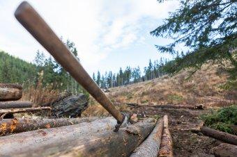 Szemet vetettek a közbirtokosságok vagyonára: Ozsdolán kívül Lövétén is visszaállamosítanák a helyi közösség erdejét