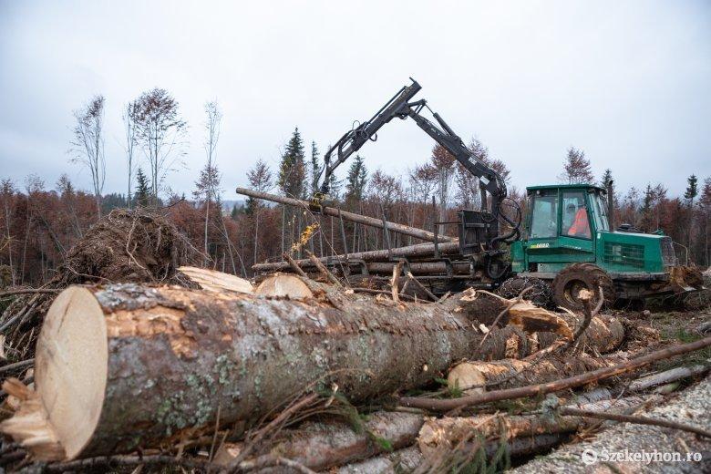 Annyi fa dőlt ki februárban, amennyit kilenc év alatt sem tudtak volna kivágni