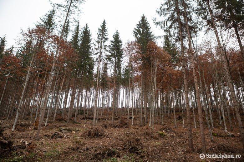 Hároméves gyerek tűnt el a hetei erdőben