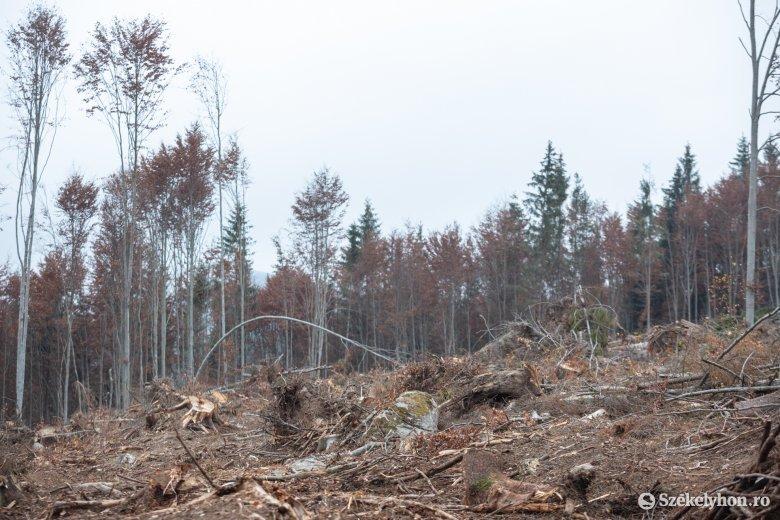 Erdősítést szorgalmazó támogatási program indul