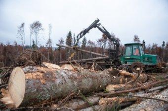 Számítógépes nyomkövető rendszerrel szorítaná vissza az illegális fakitermelést Tánczos Barna környezetvédelmi miniszter
