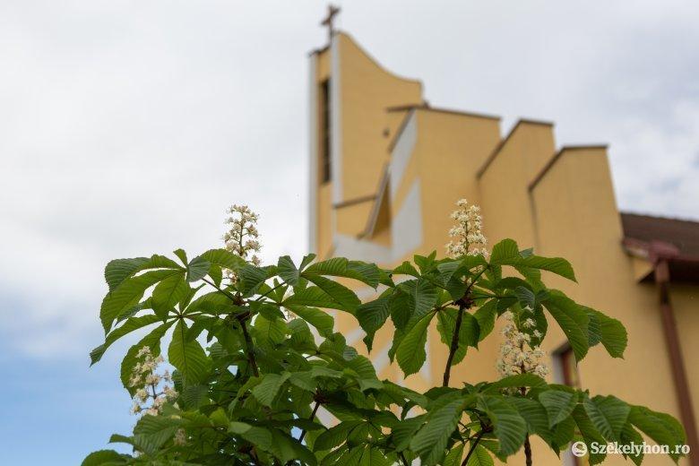 Ferenc pápa csíksomlyói látogatásának évfordulójára kivirágzott Székelyudvarhelyen az esemény emlékfája