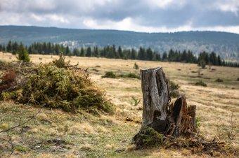 Hargita megyei talaj: a minőség jó, a besorolás rossz