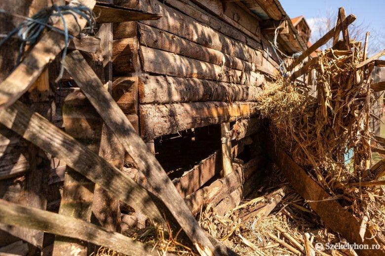 Ismét tyúkokat pusztított a medve Vaslábon