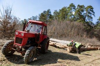 Minden eszközzel akadályozzák a romániai fakitermelést: már jóval olcsóbb az importból származó farönk a helyinél