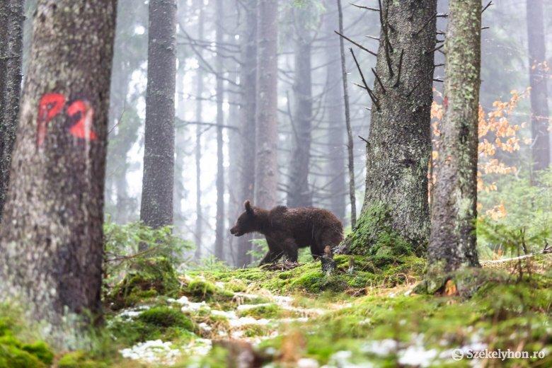 """Nyugi van medvefronton, és még ezután jöhet a """"füvezés"""""""