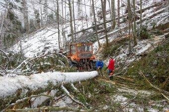 Hargita megye turistaösvényeinek jelentős része járhatatlan a viharokban kidőlt fák miatt