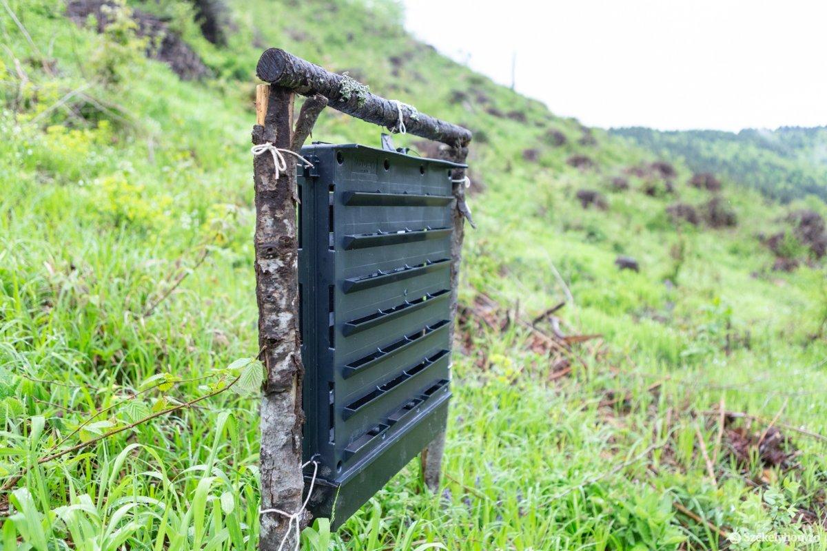 Feromonokkal vonzzák a csapdába a rovarokat •  Fotó: Erdély Bálint Előd