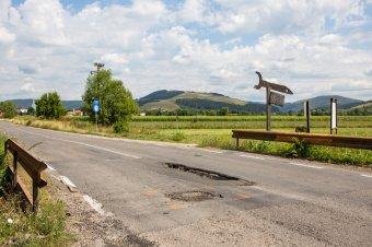 Medvét ütöttek el Recsenyéd és Homoródszentmárton között