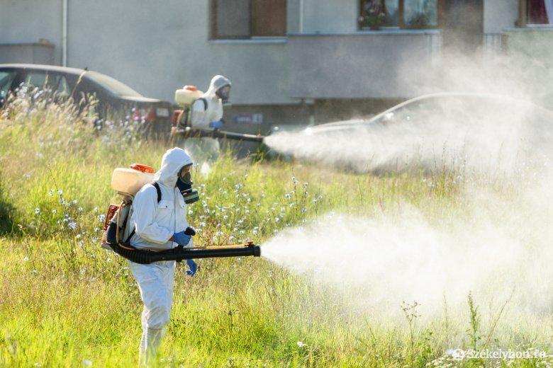 Ezért érdemes megismételni a rovarritkító beavatkozást