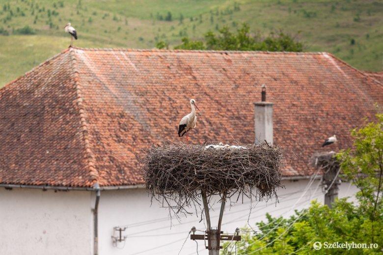 Fészkestől lezuhant gólyát mentettek meg