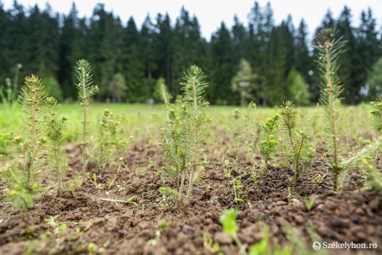 Hargita megye éppen csak lecsúszott a dobogóról a tavalyi erdőtelepítések tekintetében