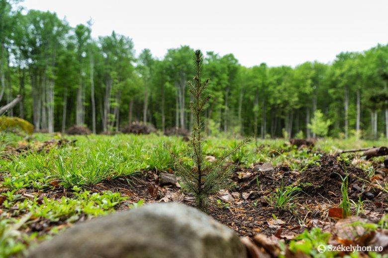 A jövőnek üzenve elegyítették az erdőt vadgyümölcsfákkal