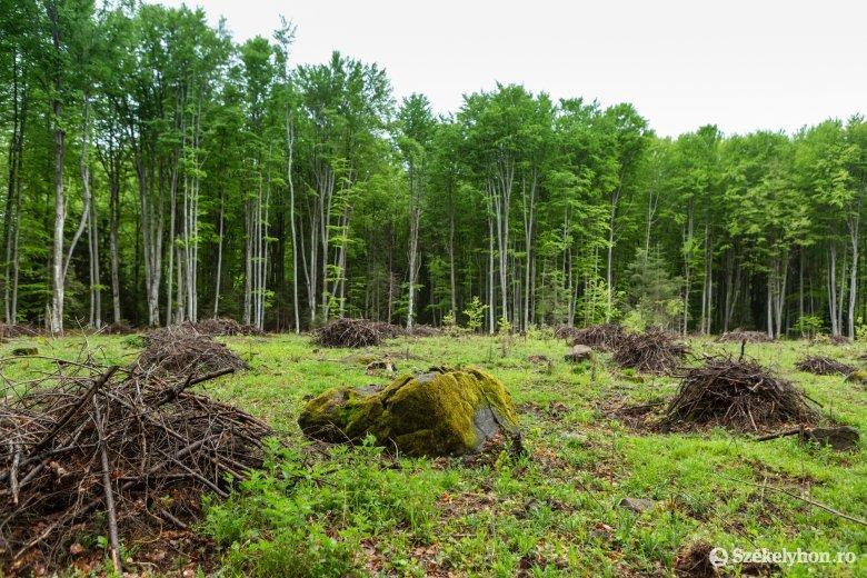 Masszív erdőfelújítási munkálatok zajlottak tavaly, nincs erdélyi megye a top 3-ban