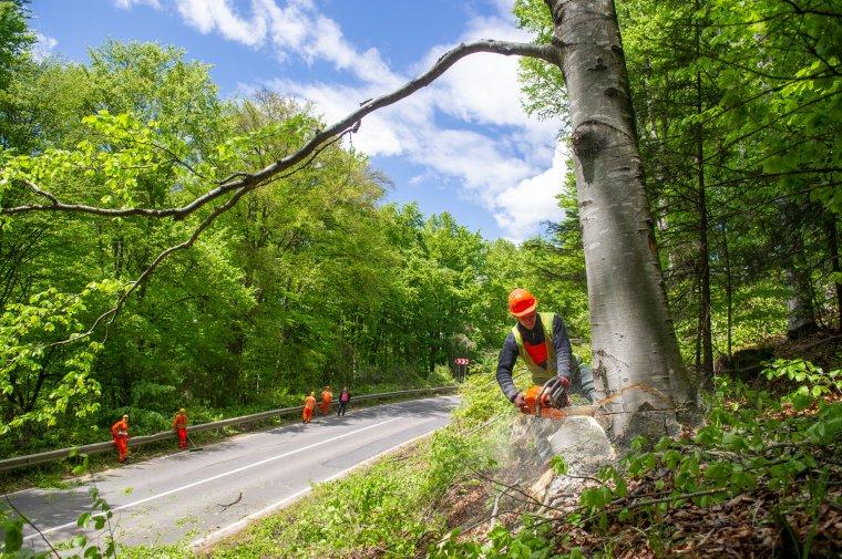 Így vágták ki a veszélyes fákat a Cekend-tető és Máréfalva között – fotók és videó