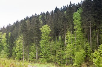 Akadályoznák az erdőgazdálkodást: Románián és Magyarországon kívül további kilenc EU-tagállam tiltakozik a brüsszeli terv ellen