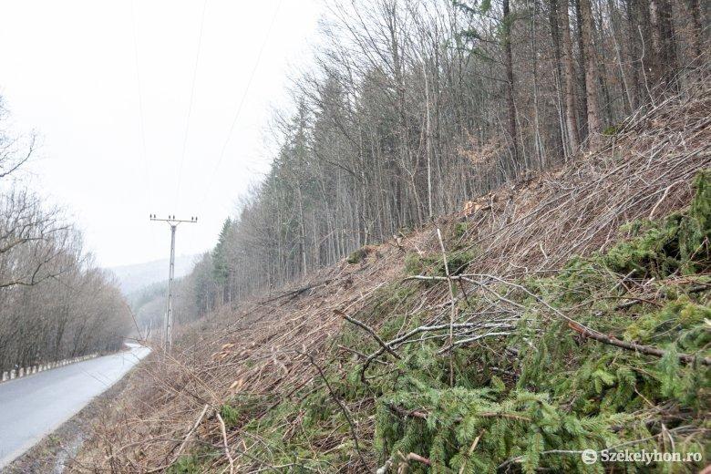 Fakivágások a 138B jelzésű megyei út mentén: a biztonságos áramszolgáltatás és közlekedés érdekében dolgoznak