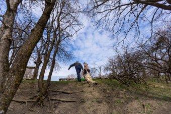 Hat hónap alatt ötszáz háziállat esett a medvék áldozatául Hargita megyében