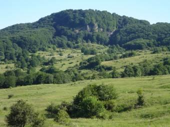Nem látják az erdőtől az utat: állami hatóság akadályozza a Maros és Hargita megye közötti nyomvonal megépítését