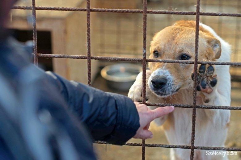 Készülnek a télre a székelyföldi kutyamenhelyeknél