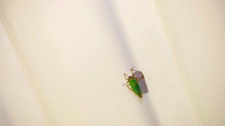 """""""Sáskajárás"""" a lakásban – a kánikula miatt megszaporodtak a rovarok a környezetünkben"""