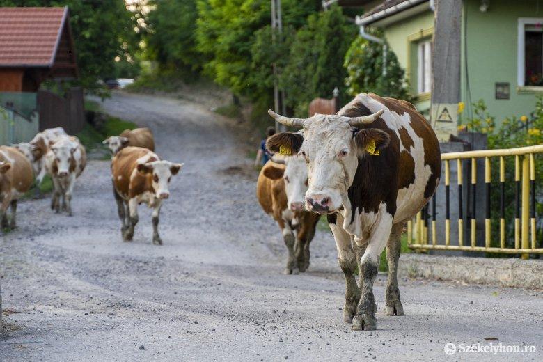 Mezőgazdasági koronavírus-támogatás állattenyésztőknek