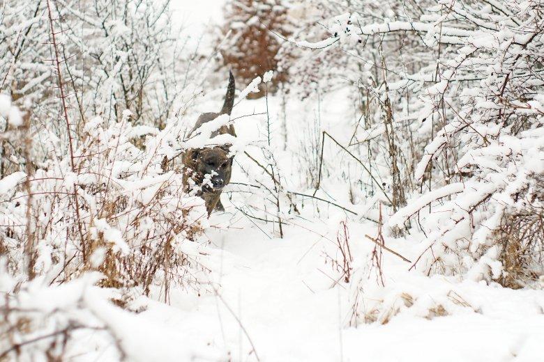 Hó hiányában egyelőre kevés bevetésük volt a hegyimentőknek