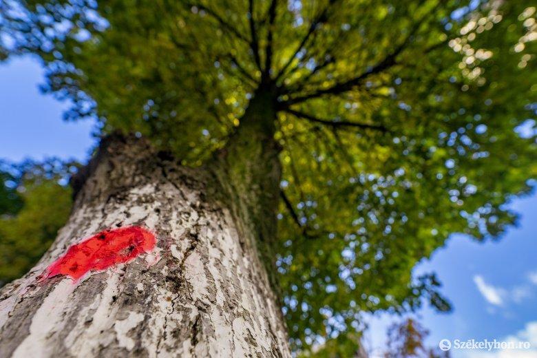 Ezt is megértük: leállították az indokolatlan fakivágásokat Marosvásárhelyen
