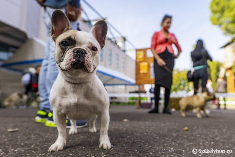 Ha nem kapnak időben segítséget, a mérgezés végzetes lehet a kutyák számára