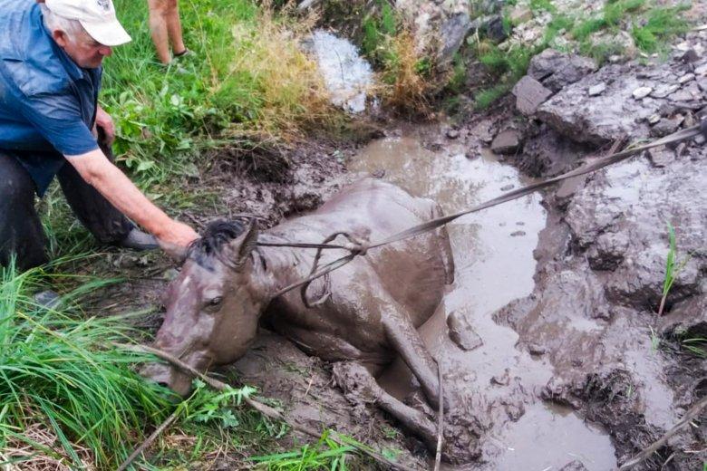 Tűzoltók mentették ki a sár fogságából a lovat
