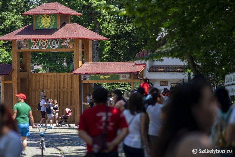 Szabadtéri maszkviselés: a segesvári várba és a vásárhelyi állatkertbe csak maszkkal lehet belépni