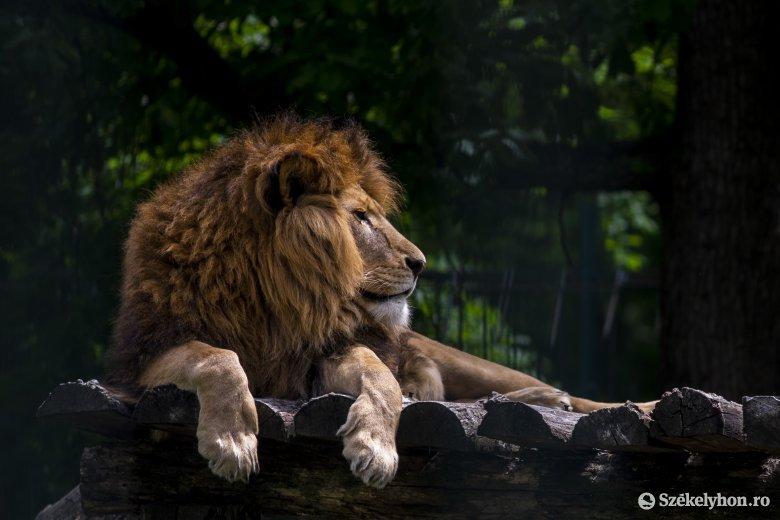 Szombaton megnyílik a marosvásárhelyi állatkert