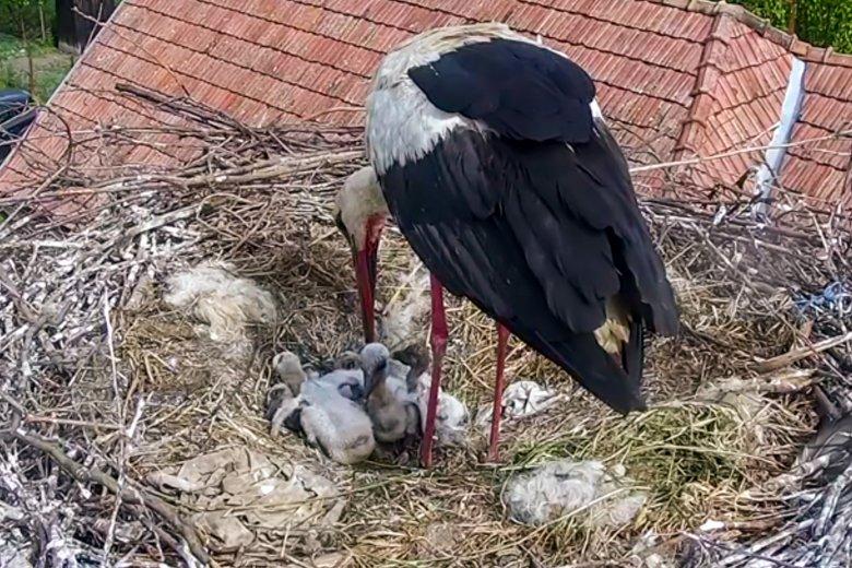 Romániában már kihaltnak hitt madárfaj tojásaira találtak