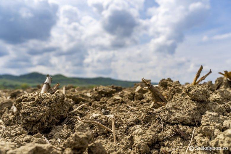 Több mint egymillió hektárnyi termőterületet érintett idén az aszály