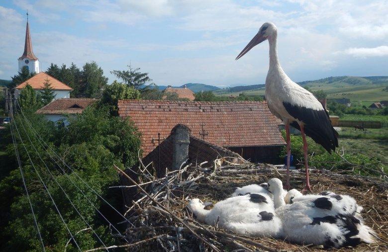 Kapcsolódás a természethez: jó program a gólyacsaládok figyelése