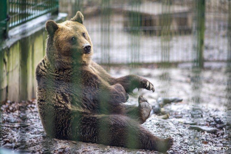 Az állatkerti nagyvadak szerint korán érkezik idén a tavasz