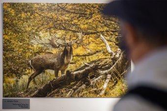 Fotókon a visegrádi országok természeti kincsei