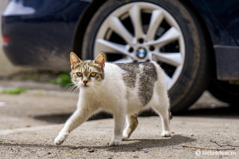 Egyre több az utcán élő kóbor macska – az ivartalanítás megoldást jelenthet