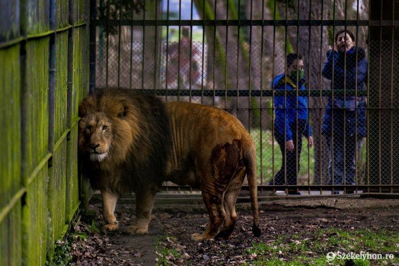 Piros Marosvásárhely: korlátozás az állatkertben és az uszodában is