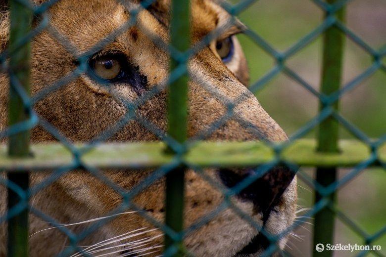 Váradszentmárton területére költöztetik a nagyváradi állatkertet, sportközpont épül a helyén