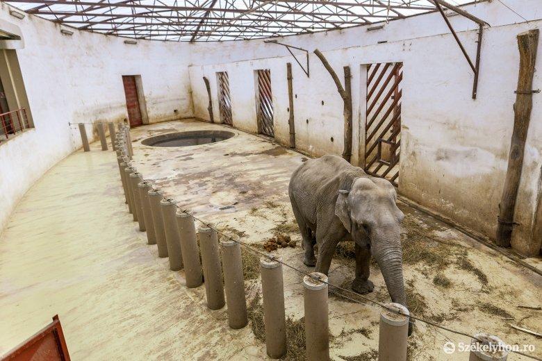 A járványhelyzet ellenére is népszerű volt a marosvásárhelyi állatkert az elmúlt évben