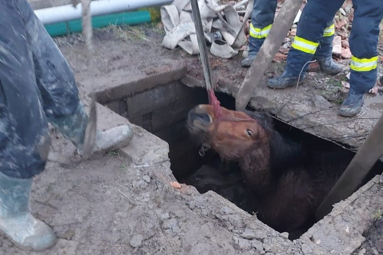 Ülepítőbe zuhant lovat mentettek ki a tűzoltók
